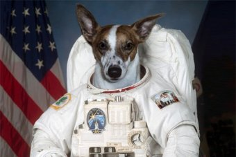 This image has an empty alt attribute; its file name is dog-in-space-suit.jpg
